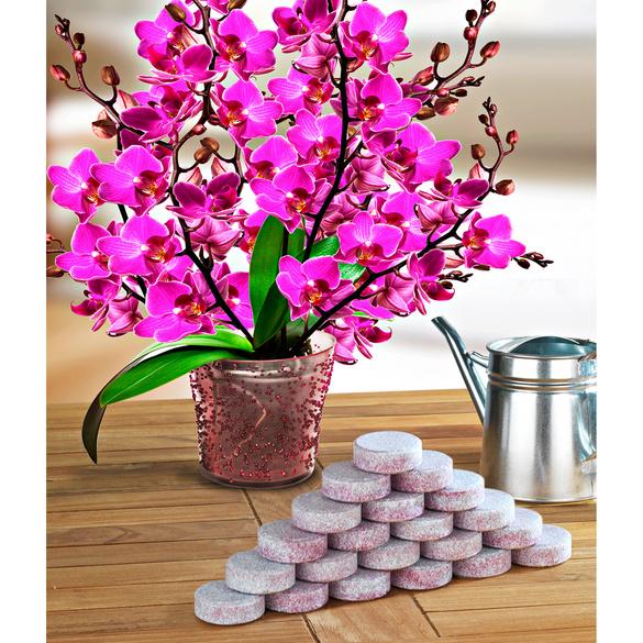 20 tablettes d'engrais pour orchidées