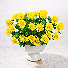 Asters, jaune