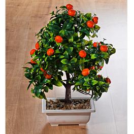 Bonsaï Mandarinier