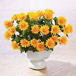 Bouquet d'asters, orange