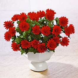 Bouquet d'asters, rouge