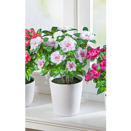 Bouquet d'azalées, blanc