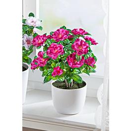 Bouquet d'azalées, violet