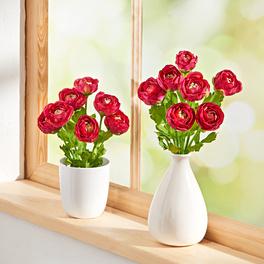 Bouquet de renoncules, rouge