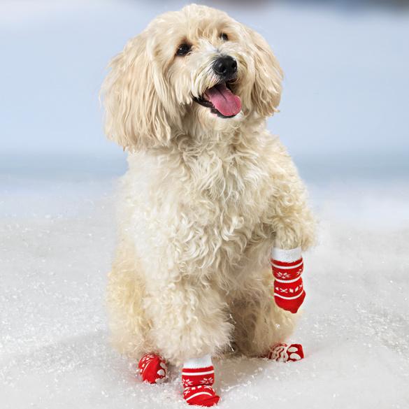 Chaussettes pour chien, grand