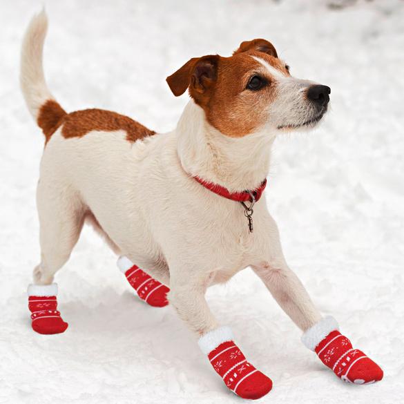Chaussettes pour chien, petit