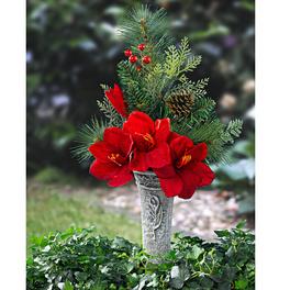 Composition Amaryllis en vase