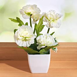 Fleur en pot, blanc