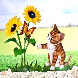 Fleurs solaires avec chaton