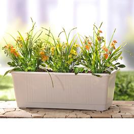 Garnissage de jardinière, fleurs des champs