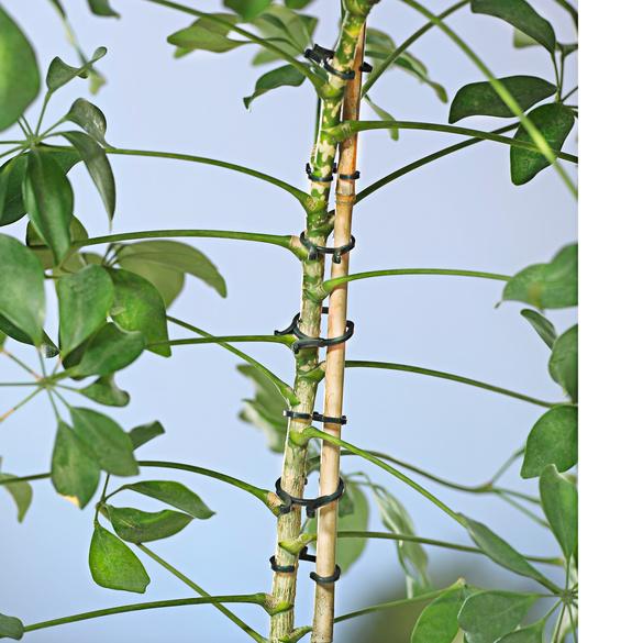 Lot de 24 clips pour plantes