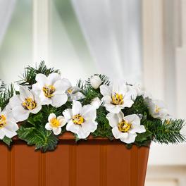 Lot de 3 roses de Noël pour jardinière