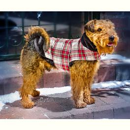 Manteau pour chien S