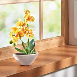 Orchidée Phalaenopsis, jaune