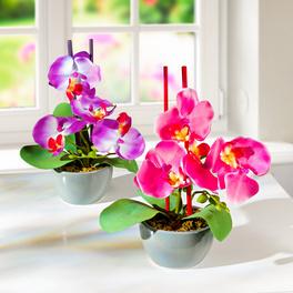 Orchidées en pot lot de 2