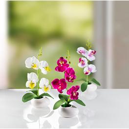 Orchidées, lot de 3