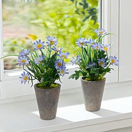 Petites fleurs bleues en pot 1+1