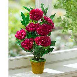 Plante en pot fleurie