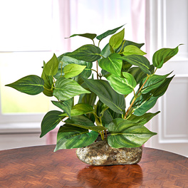 Plante verte dans, pot aspect pierre