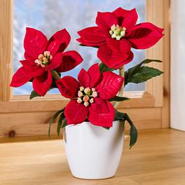 Poinsettia en pot, rouge