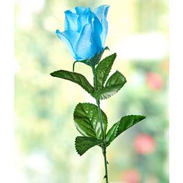 Rose Météo