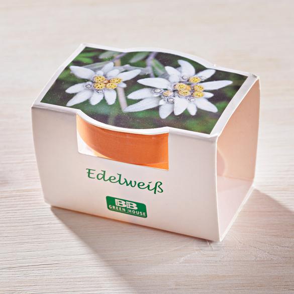 Set de plantes Edelweiss