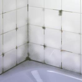 Spray anti-moisissures