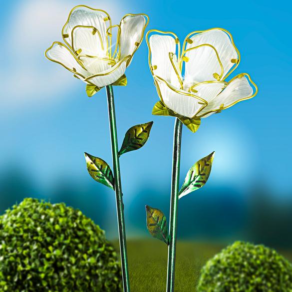 Fleur solaire
