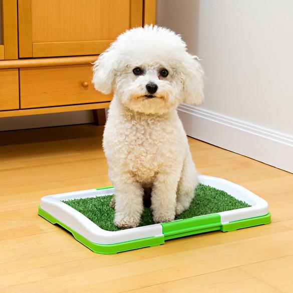 Toilettes pour chien