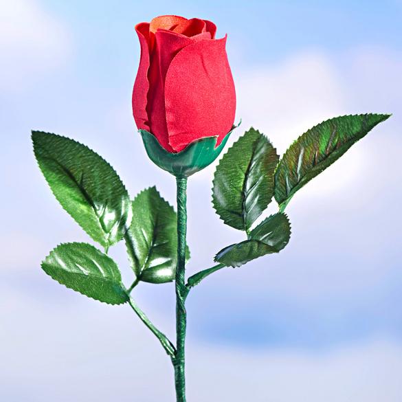 Rose musicale
