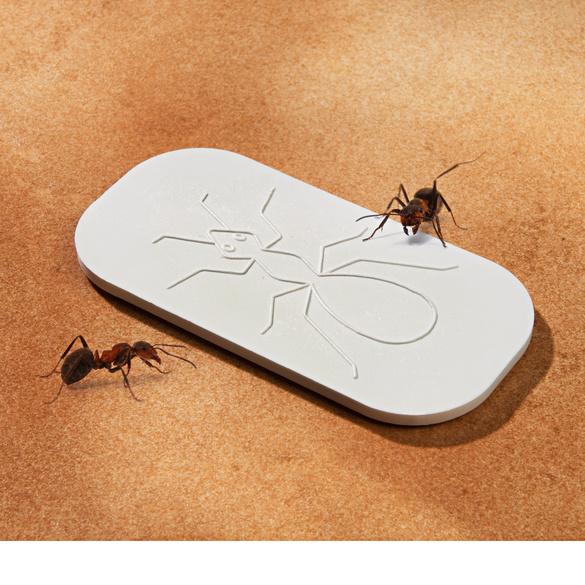 Plaquette anti-fourmis