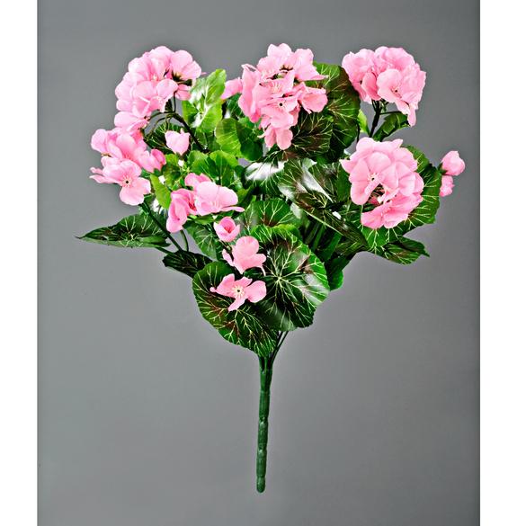 Bouquet de géraniums, rose