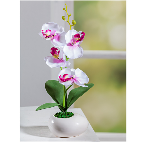Lot de 3 orchidées en pot