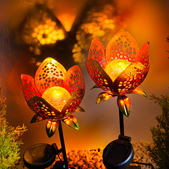 Fleurs solaires
