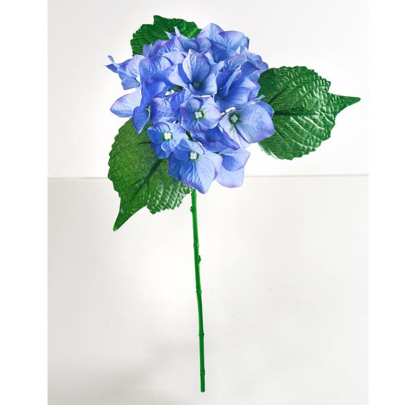 Hortensia, bleu