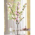 Branches de pommier fleuries, blanc