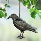 Corbeau anti-oiseaux