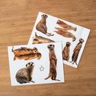 Stickers pour poubelle Suricates