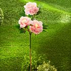 Pivoines solaires, rose