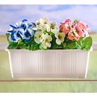 Lot de 3 bouquets pensées