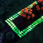 Lot de 4bordures phosphorescentes pour parterres