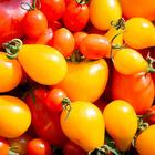 Jardin de tomates