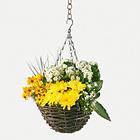 Panier pour plantes retombantes