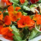 Tapis de graines Fleurs comestibles